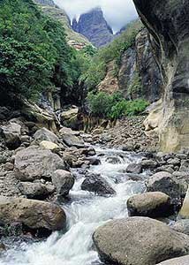 Drakensberg Bubbling Brook