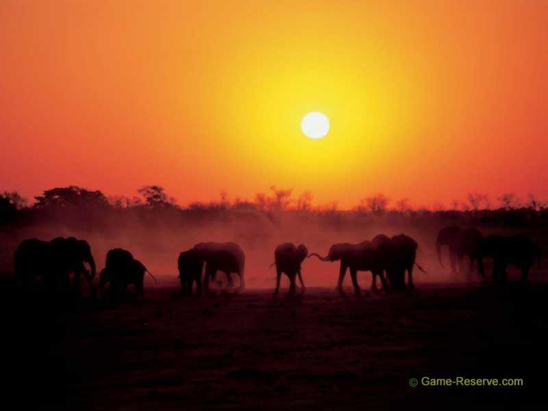 BACK TO SCREENSAVER INDEX | HOME Elephant Herd at Sunset