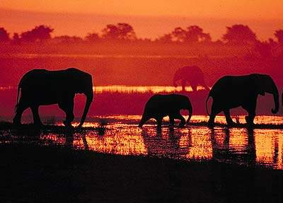 Elephants at Dusk. Pic: David Anderson