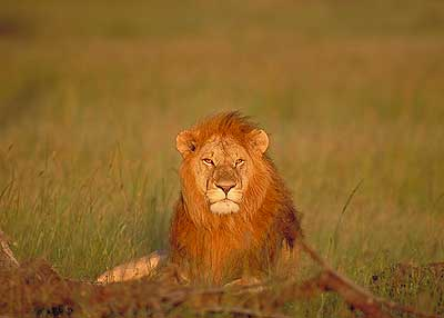 The Masai Mara is one of the
